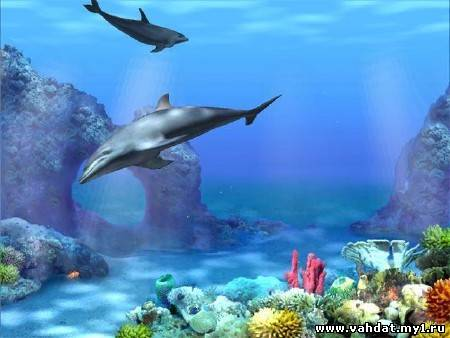 Dolphins 3D Screensaver and Animated Wallpaper 1.0 Build 3 (2012/ML/RUS)