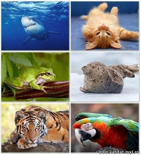 Эти забавные животные. Часть №12